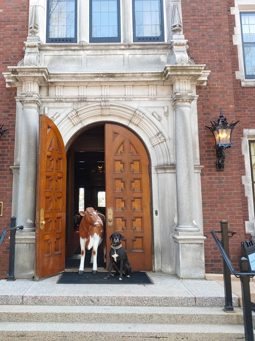 Lillian the cow stands in the entrance of Glensheen.