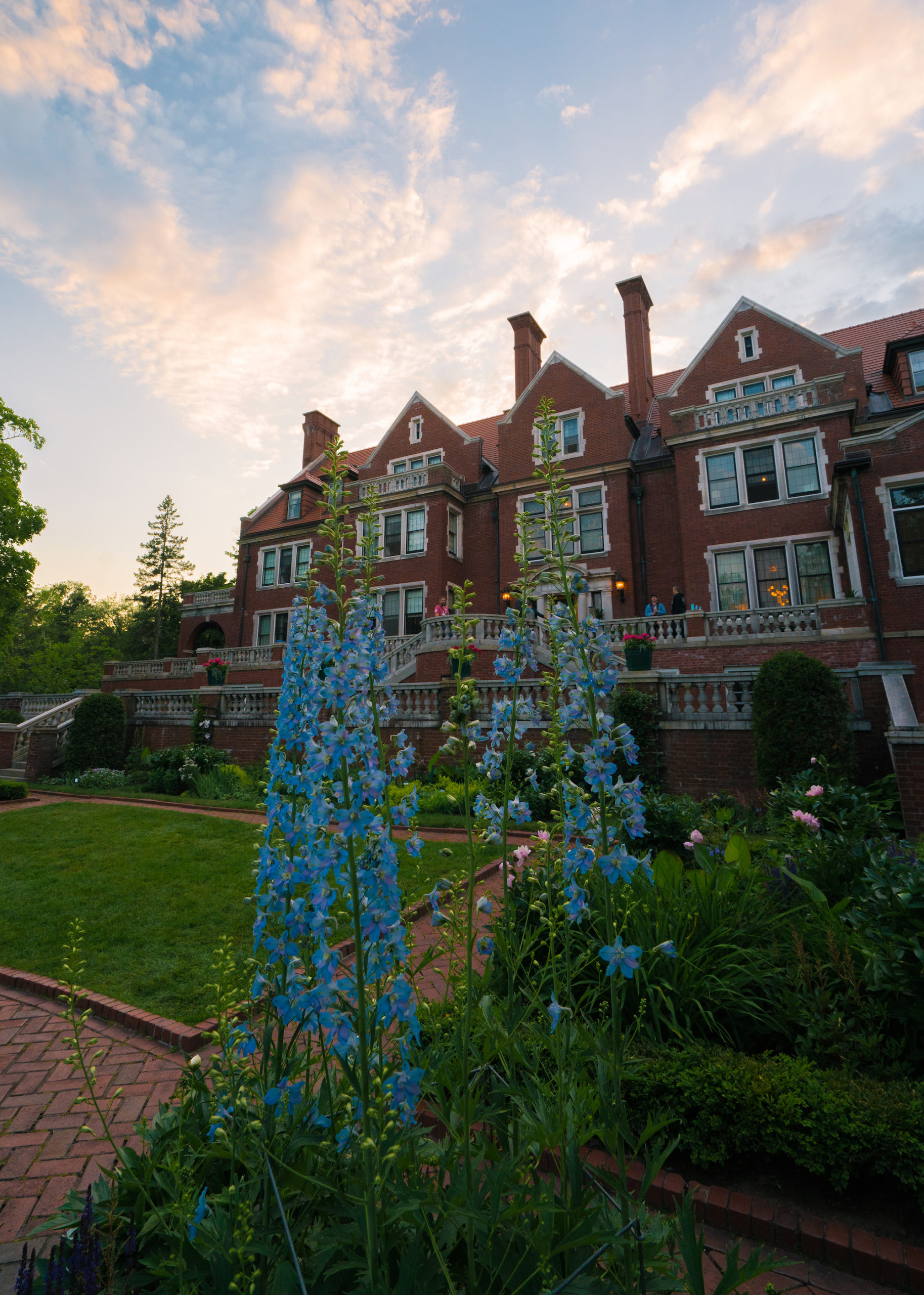 Blue flowers with Glensheen in the background